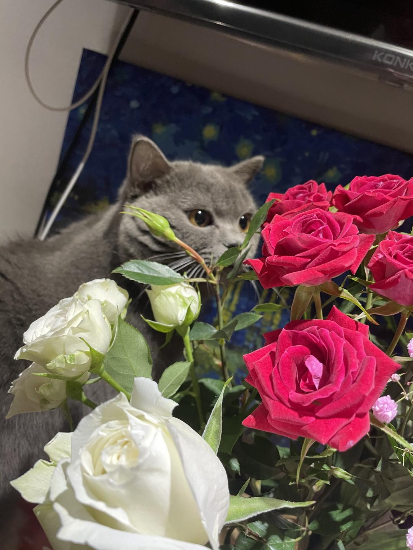 2021.02.06-单身独居的杭漂女生记之养猫带来了什么改变-天问信息博客平台